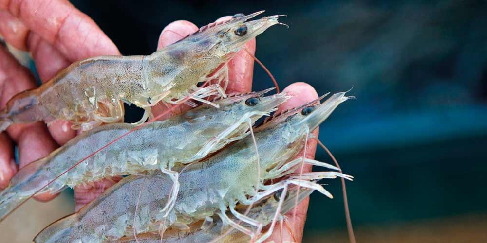 Industria Pesquera Santa Priscila
