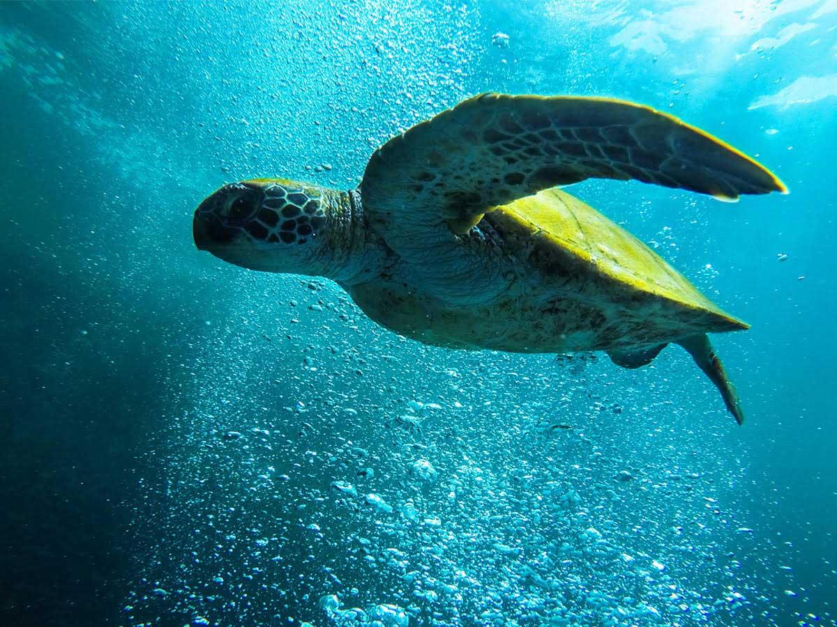 Santa Priscila - Día mundial de las tortugas marinas
